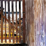 Isla Mujeres Perros