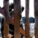 Isla Mujeres Perros-detail